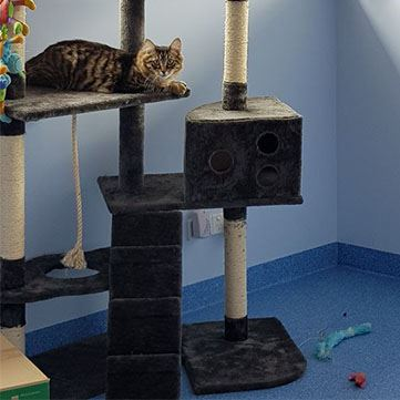 Cat Boarding Kennels - Cat Stays and Minding