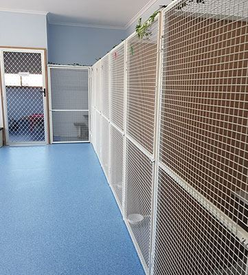 Cat Boarding Accommodation in Adelaide Gawler