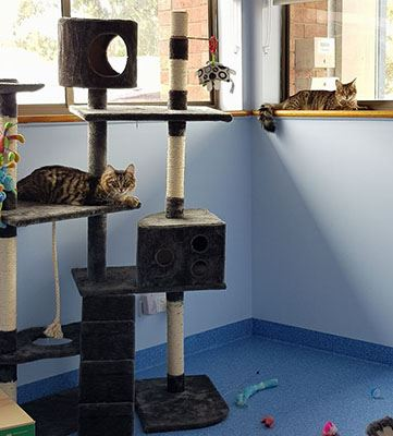Gawler Evanston Cattery Care Accommodation