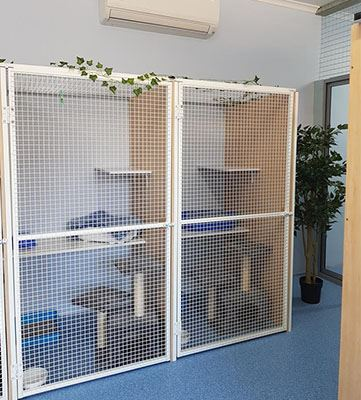Cat Vacation Stays - Cattery Boarding